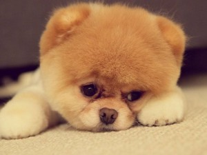 best cute puppy blog