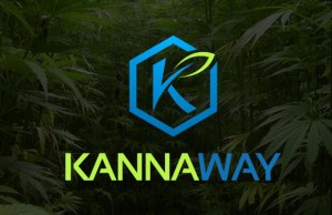 kannaway CBD oil review
