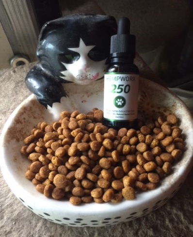 Our CBD Oil Cat Testimonial - What Really Happens