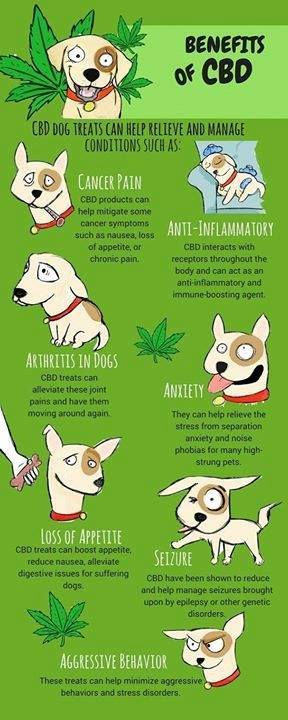 cbd oil for pets with anxiety, seizures, nervousness